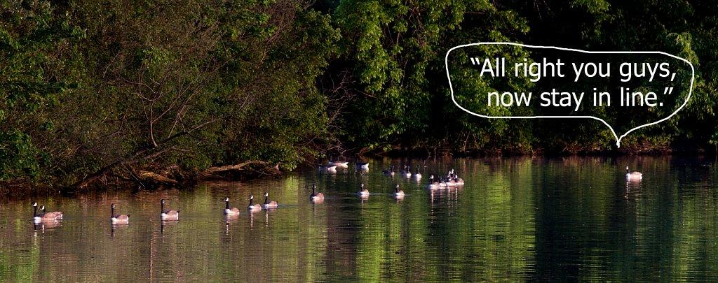 Geese-2013-6-6252.jpg